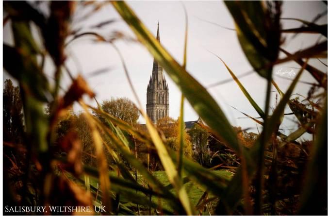 Blog Salisbury pic 8.jpg